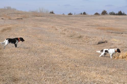 Gunnar and Litha, hunting in Nebraska